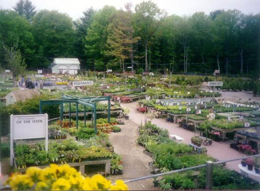 Perennials / Annuals / Trees & Shrubs