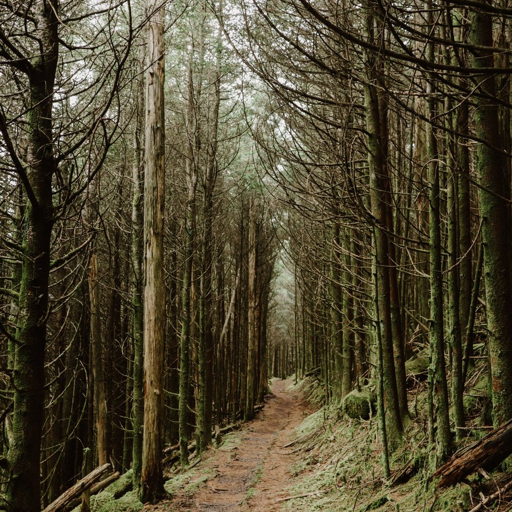 A woodland trail, a usual scene that can be found along the Appalachian Trail. Photo: Kirk Thorn