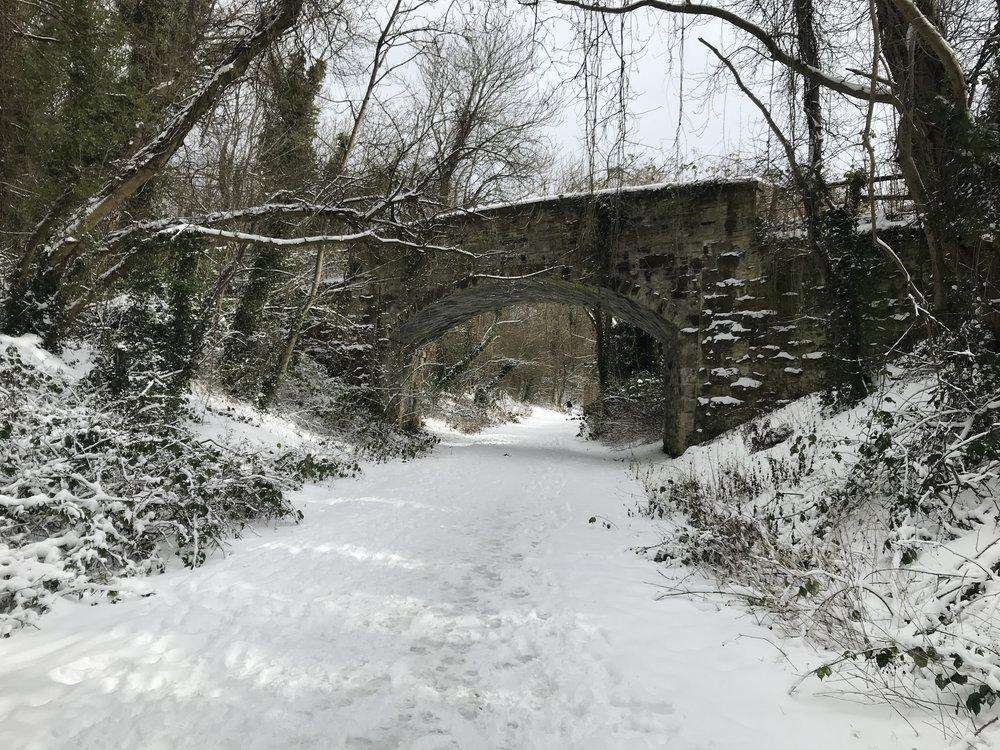 Winter Walking Path