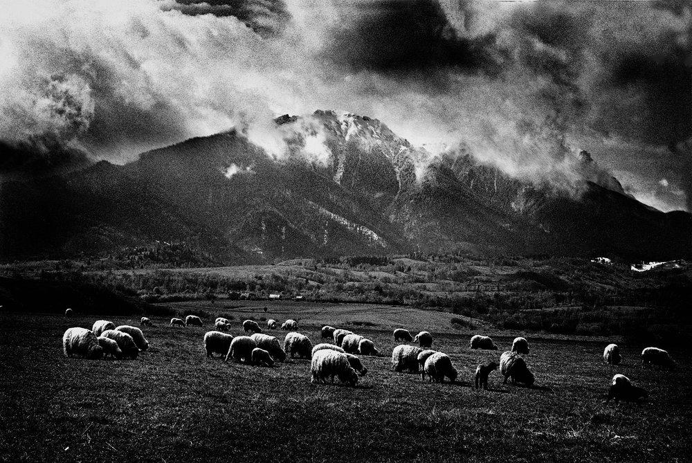 romania_Sheeps_LR.jpg