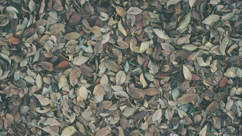 autumn keys wallpaper 1.jpg
