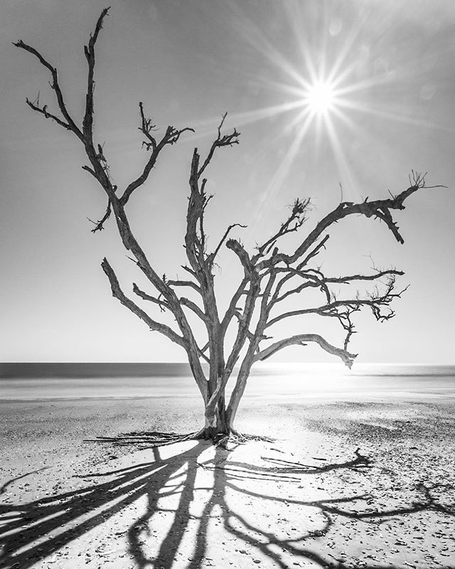 Beach Ghost ~I'm preparing for #Florence which brings to mind this image of the remains of a tree on Botany Bay bear Edisto Beach, SC. • • • • • #Hurricane #beautifuldestinations #wildernessculture#passionpassport #discoverearth#natgeoadventures#earthfocus #exploretocreate#whereeveryougo #thegreatoutdoors#greatnorthcollective #modernvoyage #earthpix #hypebeast #WHPinspired #Electric_Shotz #photoartcrew#ArtOfVisuals#bnw #bw #blackandwhitephotography #bnw_society #bnw_captures #bnw_life #bw_lover #blackandwhitephoto #bnw_planet #monoart #blackandwhiteuniverse —— 📸 Photo & Travel: shinyphotos.com ❤️ Instagram: shinyphotos 🐥 Twitter: @shinyphotos 🎥 YouTube: Shiny Photos