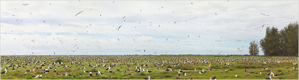Albatross Our Story Albatross