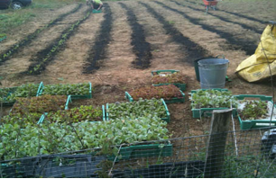 biochar field trials