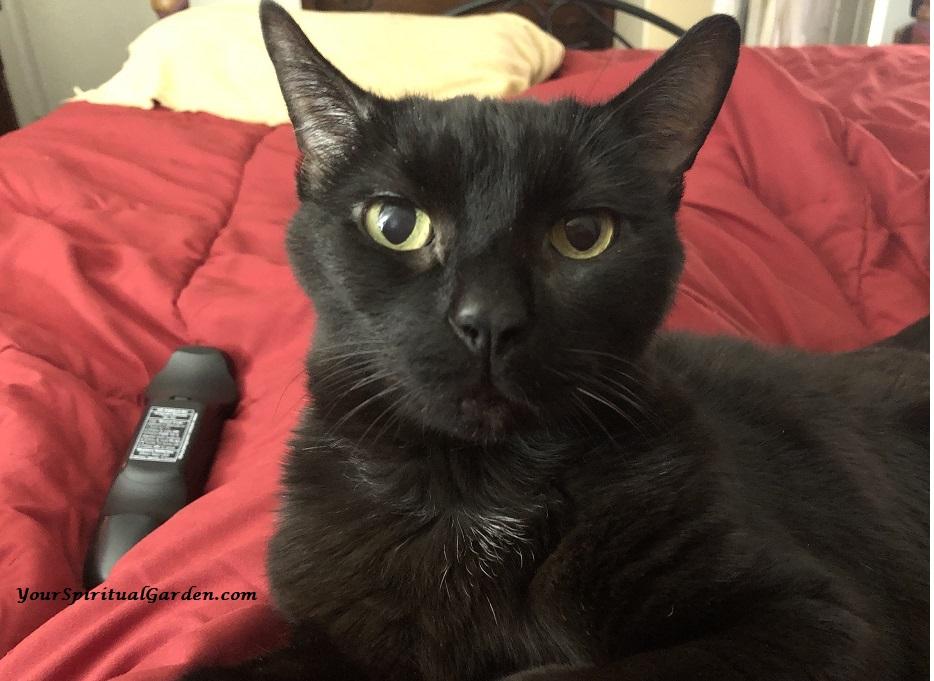 kitty noir 2 112018.jpg