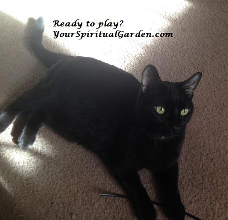 kitty play.jpg
