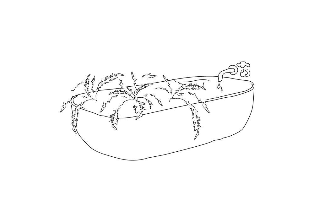 Créez une réserve d'eau - En pot comme dans la nature les racines des plantes vont chercher l'humidité en profondeur. L'hiver pour compenser la sécheresse des chauffages en intérieur ou pour créer une réserve d'eau si vous vous absentez quelques jours.Baignez votre jardinière dans un fond de 6cm d'eau pendant une bonne demi heure, égouttez, replacez jardinière dans la soucoupe.