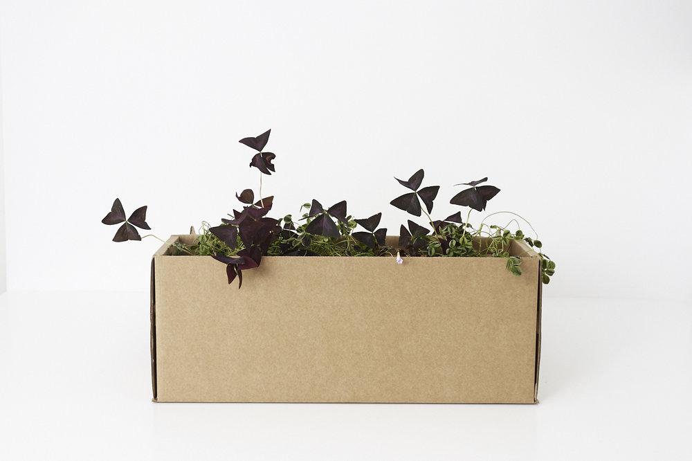 Demandez la livraison de nos petits jardins urbains sur Paris et la proche banlieue -