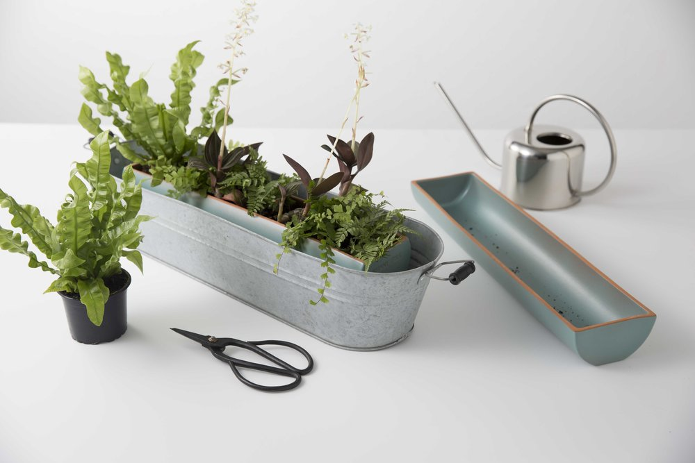 Baignez vos plantes pour leur donner de l'autonomie ! -