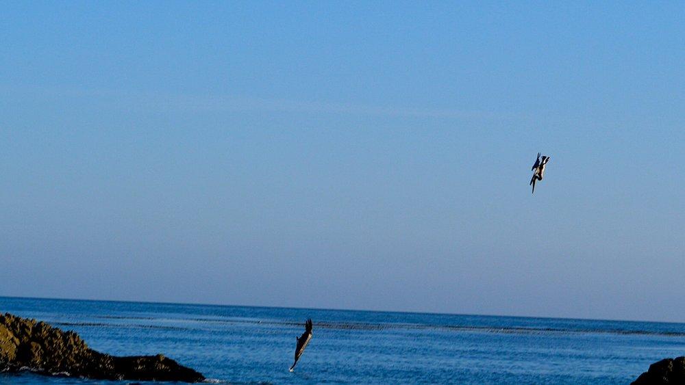 Pelican'sDive.jpg