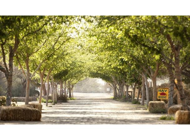 East Valley Trends Updates Queen Creek Arizona Exceptional Homes