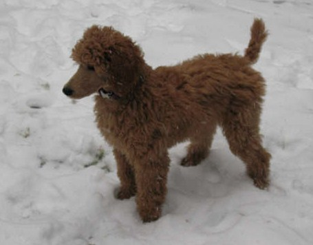 December 2008 Snow 002.jpg