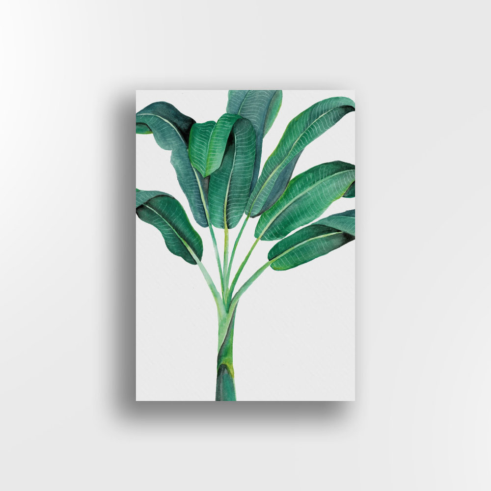 Banana Palm / Whole