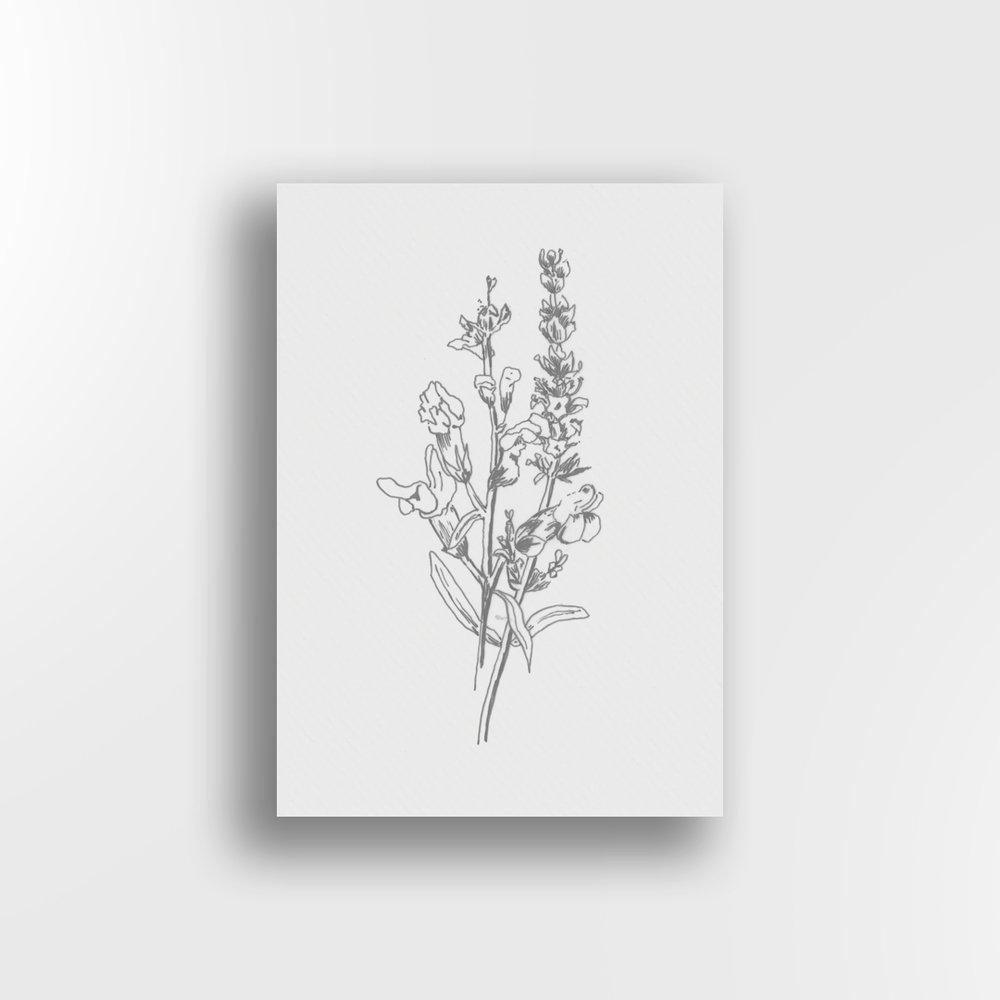 Snapdragon Sketch / Partial