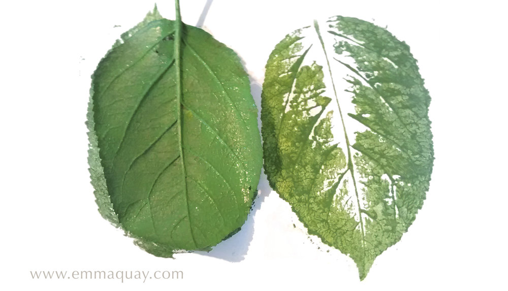 Illustrating MY SUNBEAM BABY - printing with apple leaves - www.emmaquay.com
