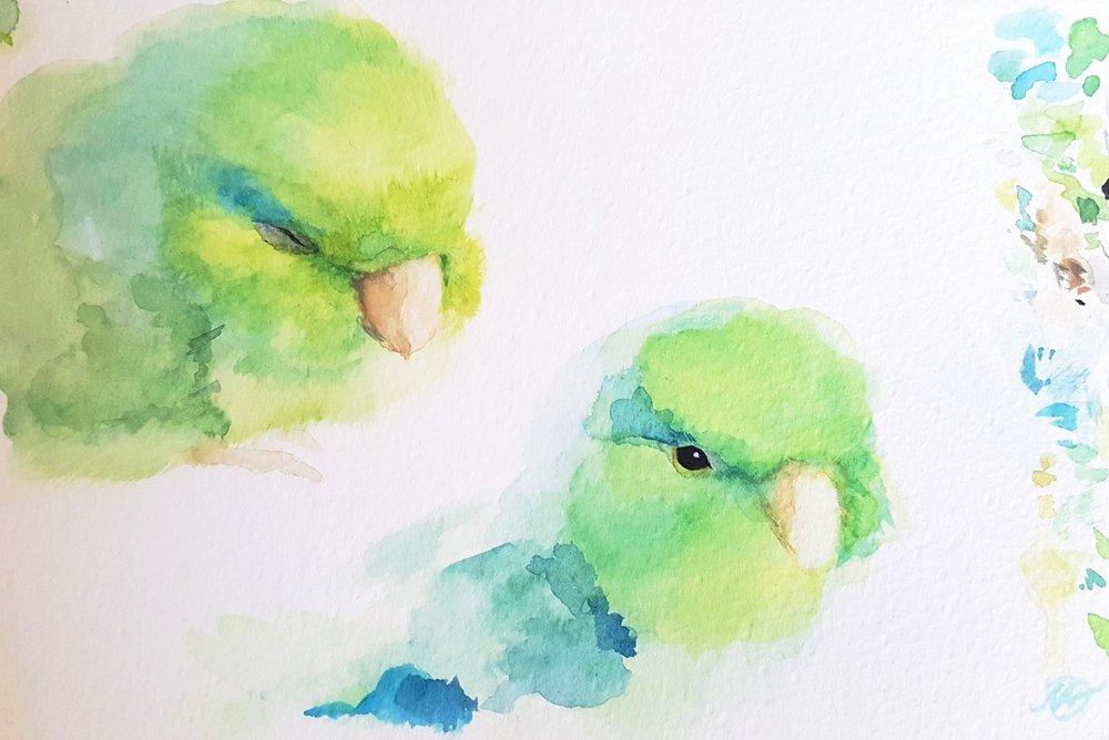 Pochi (Animal Study #1)