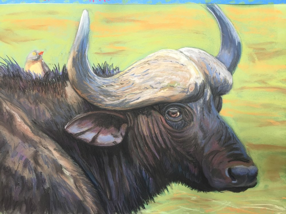 Cape Buffalo & Friend       20 x 28       Pastel on Paper     2017