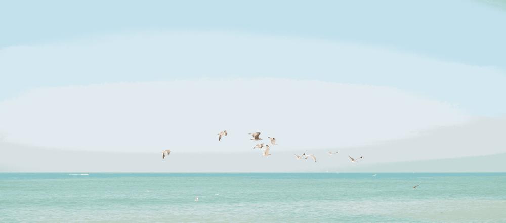 BirdsWide.png