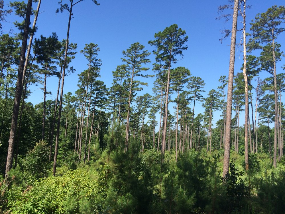 Forest ManagementHabitat Conservation Plan.JPG