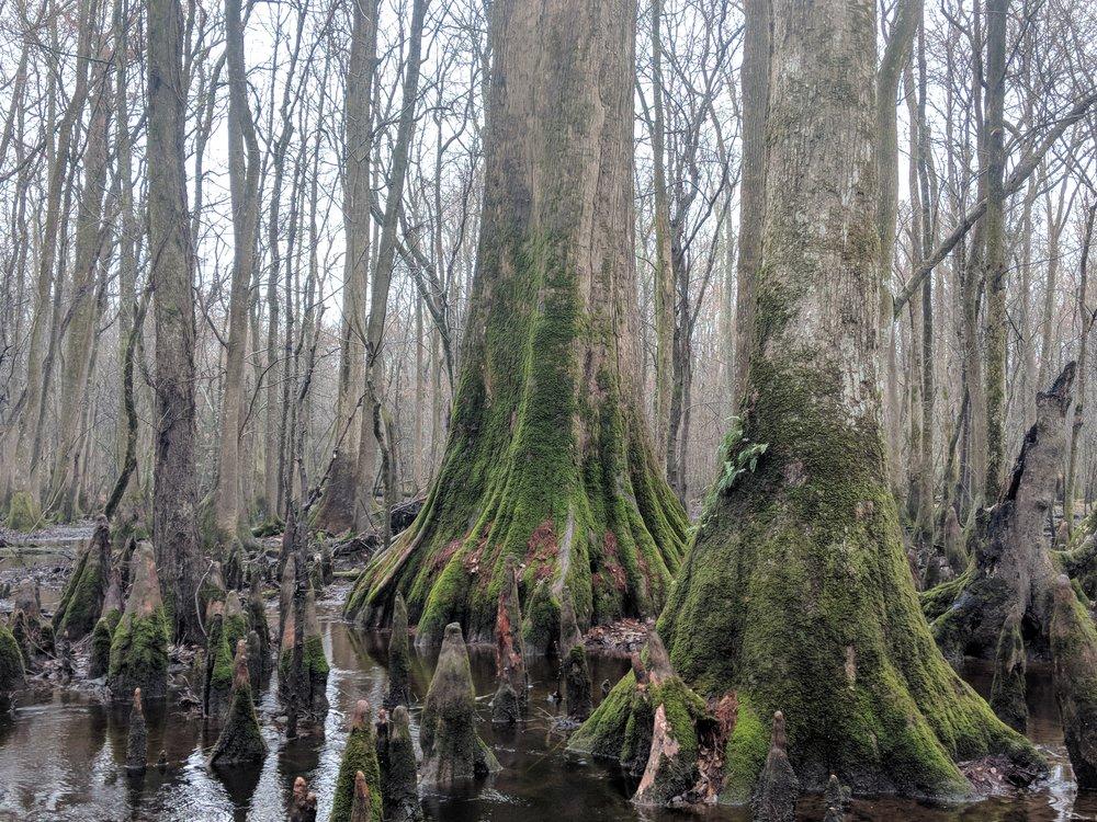 Forest Inventory & Assessment.jpg