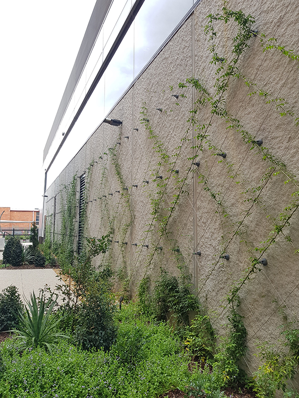 Easy green wall - 9 mths progress 2.jpg