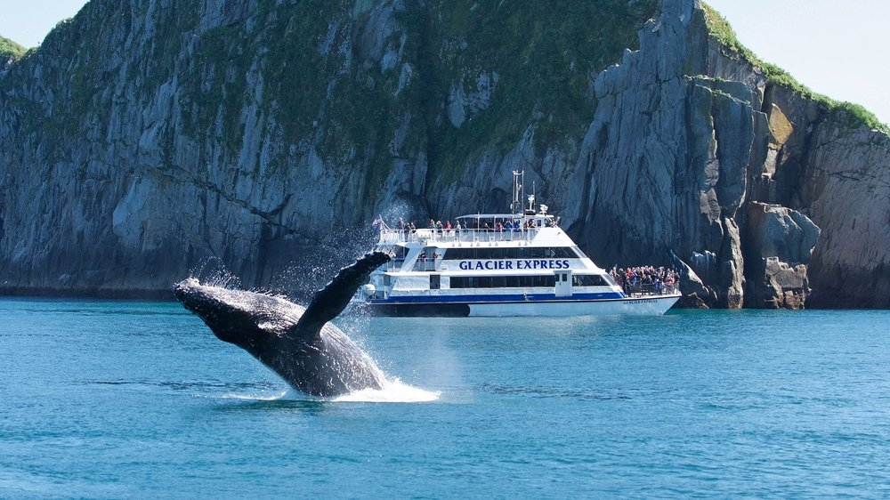 Lucky Passengers Witness A Breaching Whale