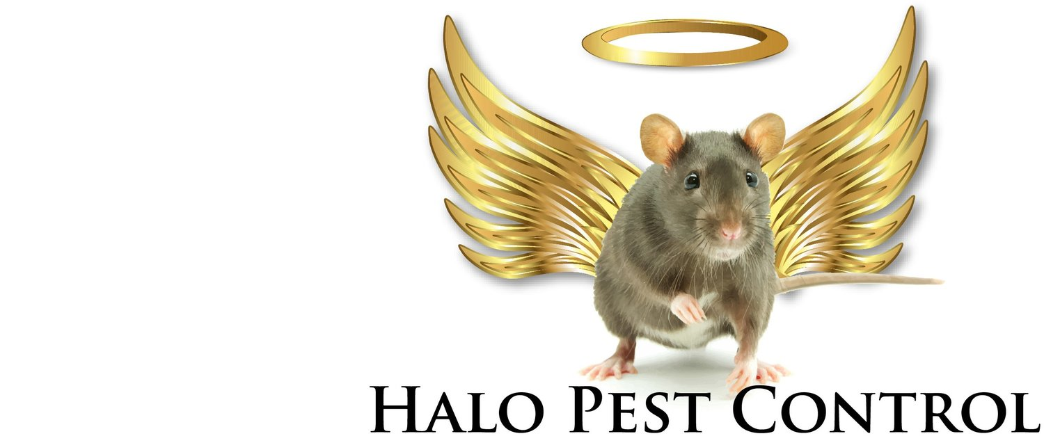 Halo Pest Control Hobart