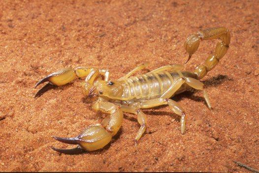 OP013_Scorpion_Elizabeth Ta.jpg