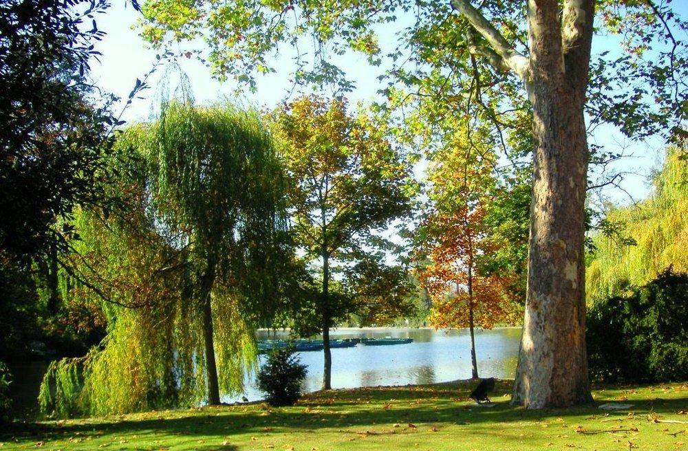 Vue du lac depuis le parc.jpg