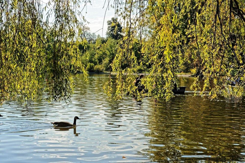 Bernache sur le lac.jpg