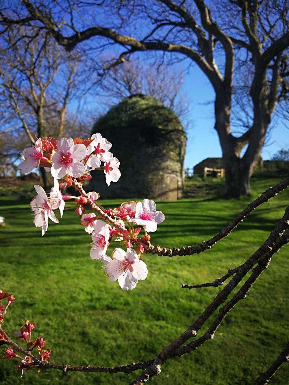 SpringCornwall.jpg