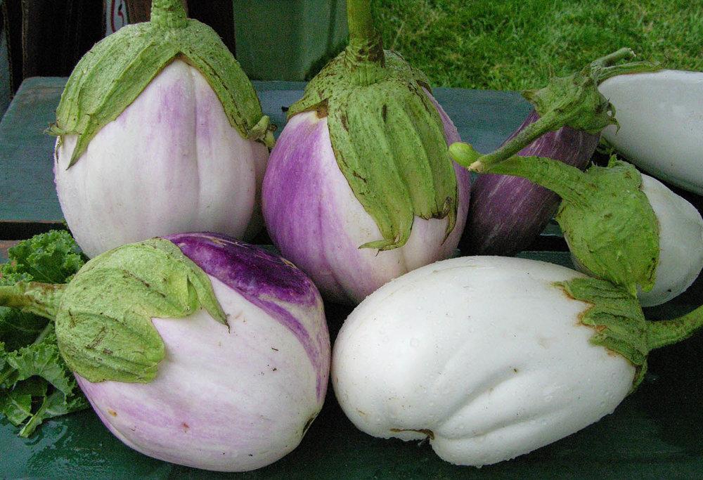 eggplant a.jpg