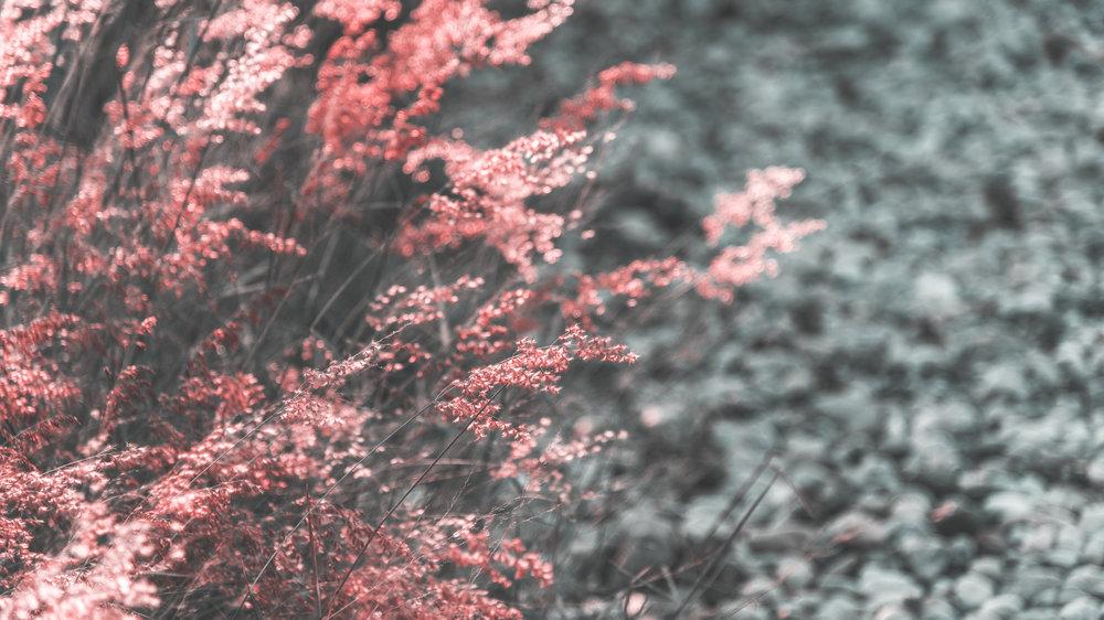 wild-grass-growing-in-nature-PFUGLQ2.jpg