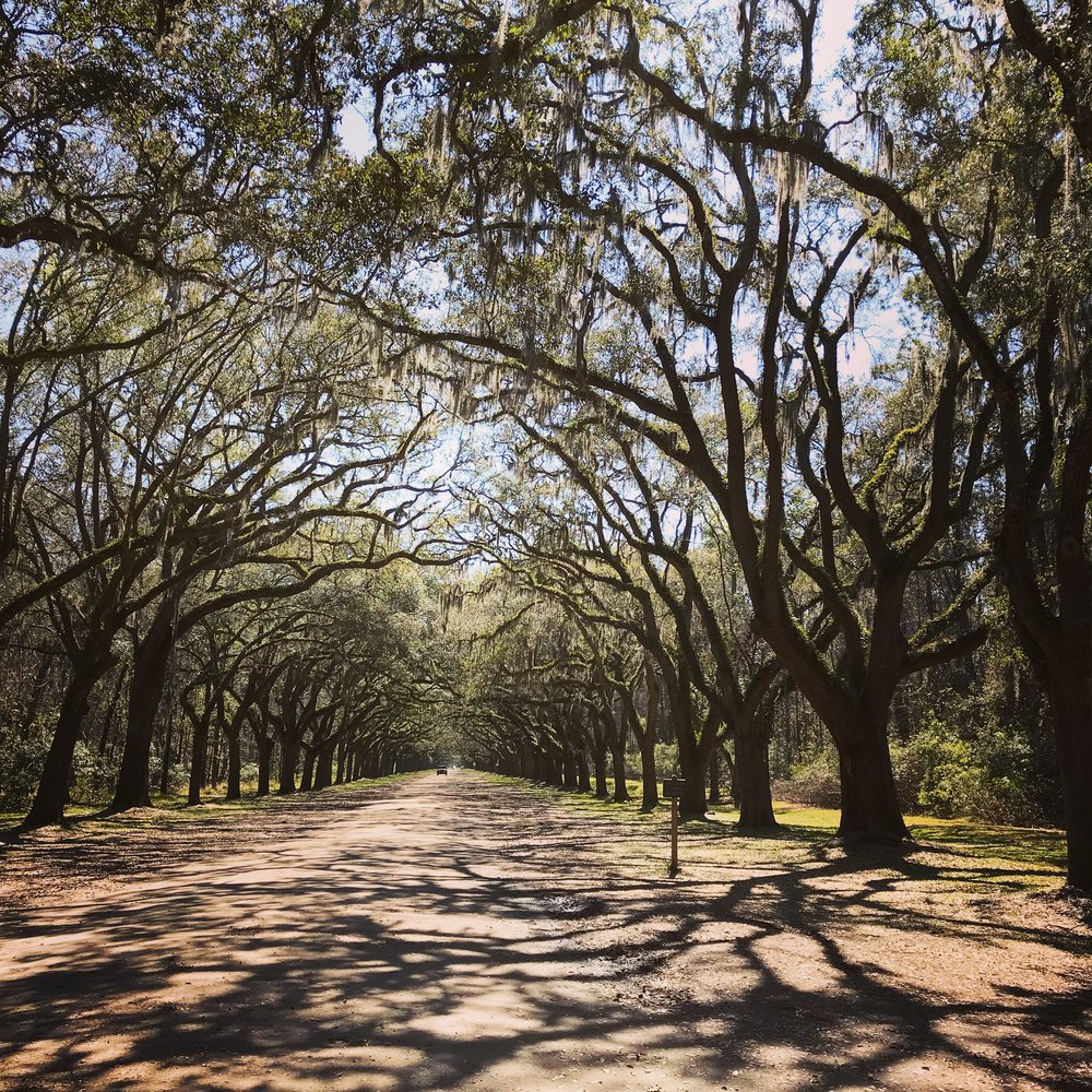 Wormsloe Historic Site, Savannah