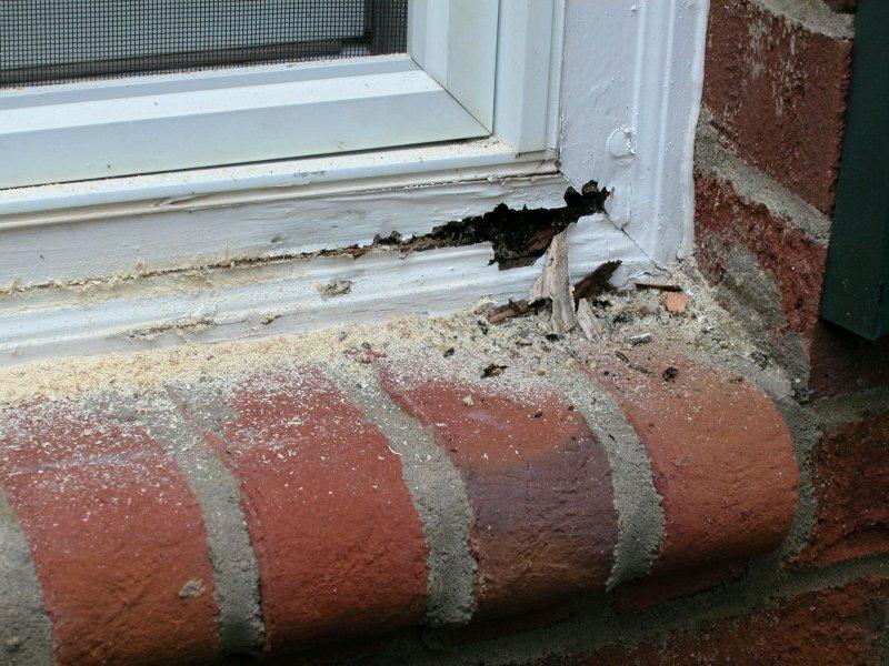 Exterior-Brick-Molding.jpg