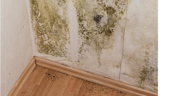 mold-wall-w-660x330.jpg