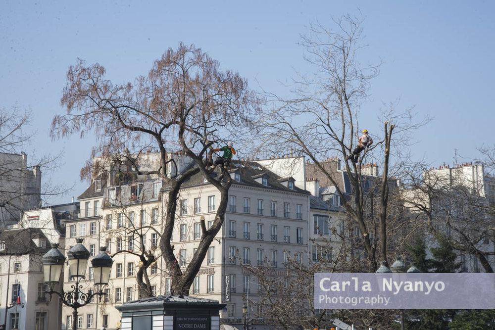 paris_2015-7.jpg