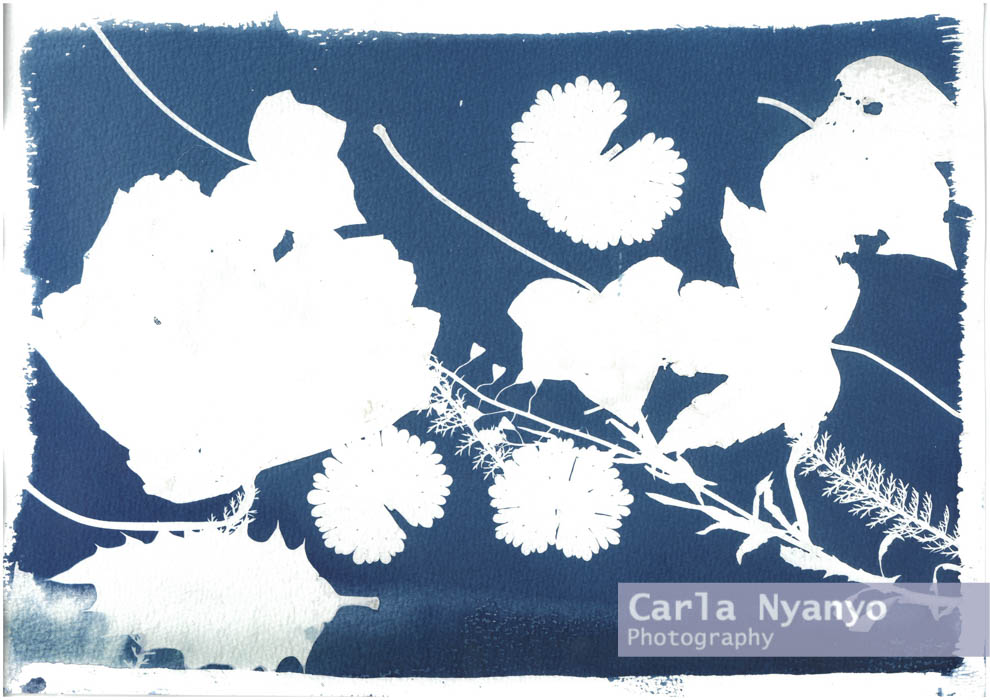 the_cyanotype_process-2.jpg