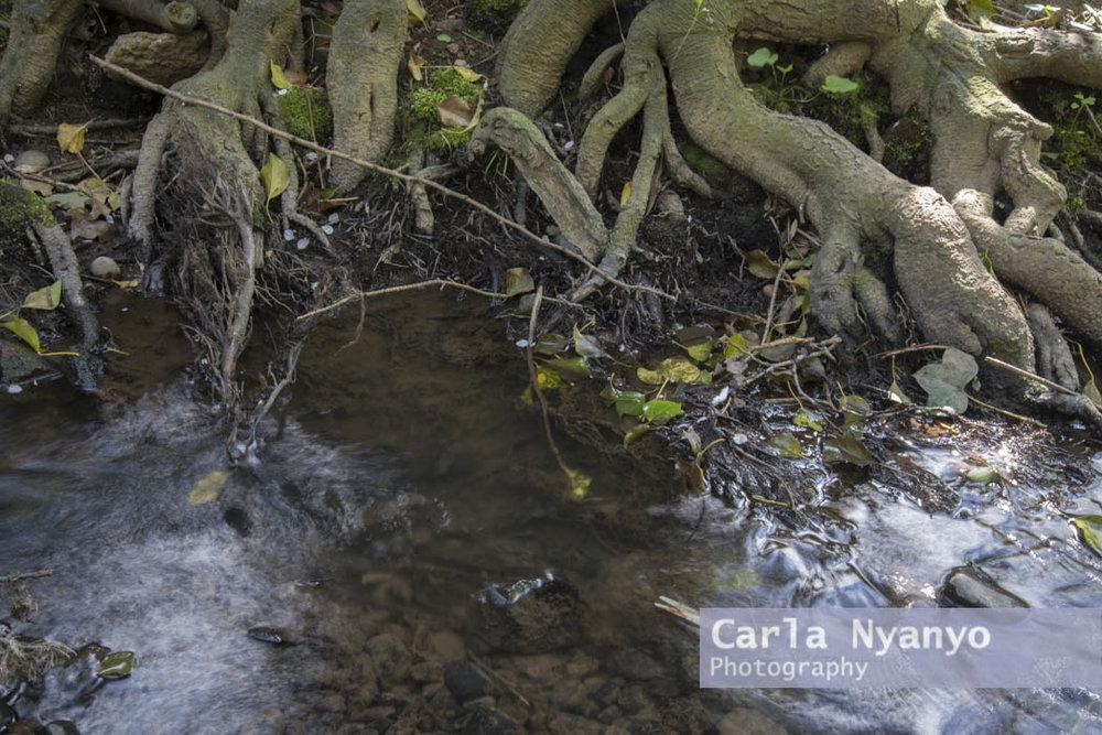 river_sherbourne-118.jpg