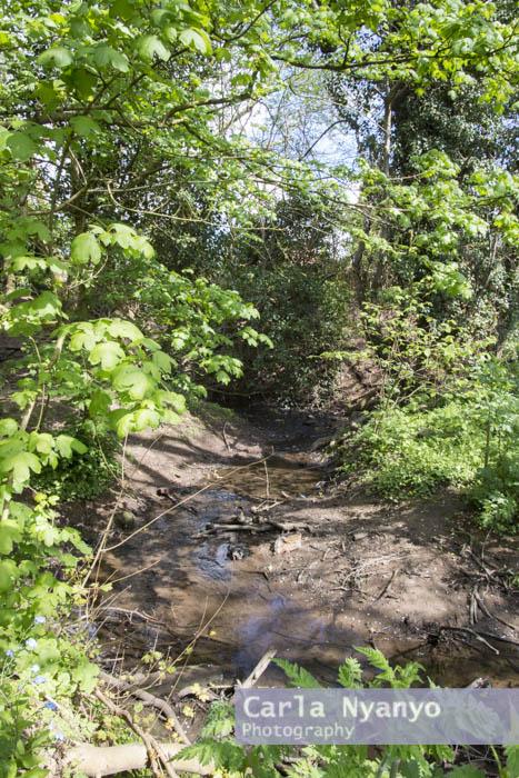 river_sherbourne-121.jpg
