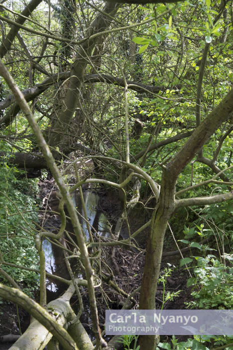 river_sherbourne-129.jpg