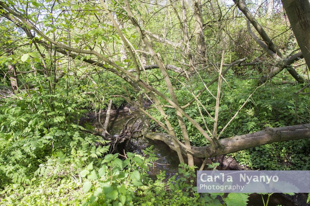 river_sherbourne-131.jpg