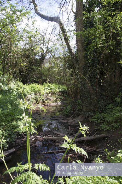 river_sherbourne-133.jpg