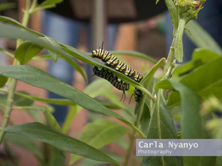 stratford_butterfly_farm_2017-3.jpg