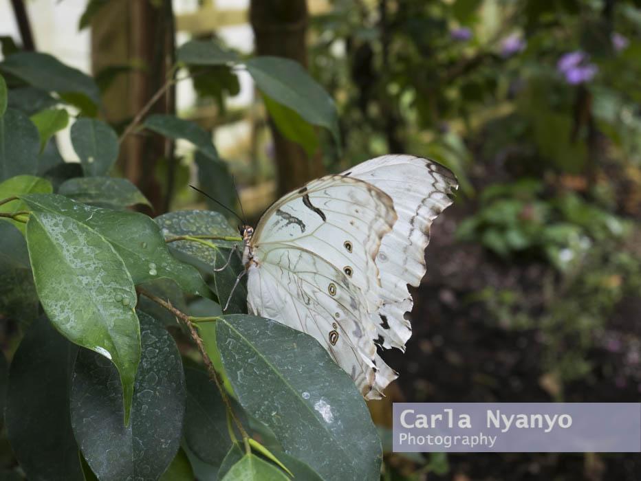 stratford_butterfly_farm_2017-6.jpg