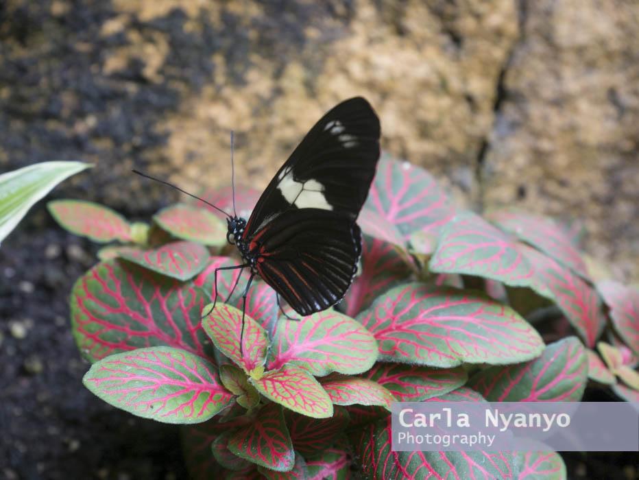 stratford_butterfly_farm_2017-10.jpg