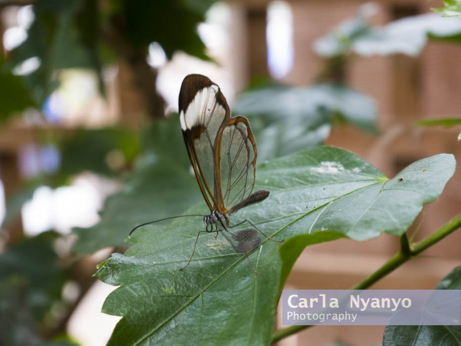 stratford_butterfly_farm_2017-11.jpg