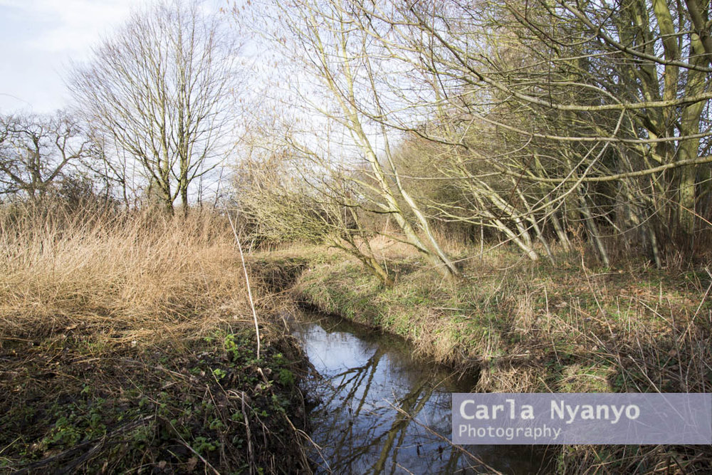 river_sherbourne-146.jpg