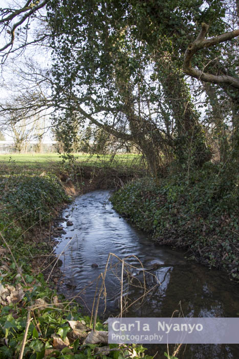 river_sherbourne-148.jpg