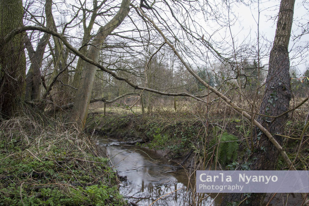 river_sherbourne-169.jpg